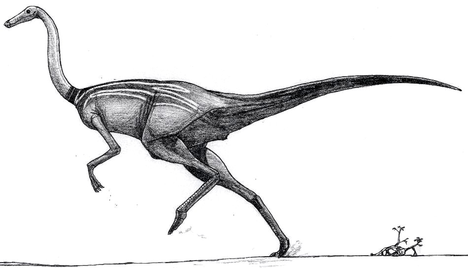 Gallimimus mongoliensis